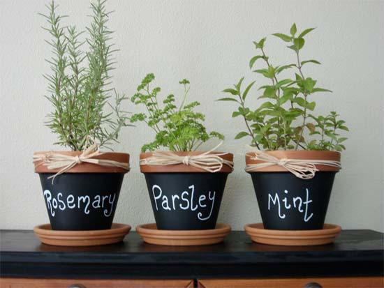 Herb garden at home