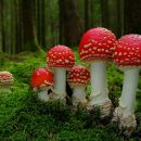 Mushroom poisoning – symptoms and first aid
