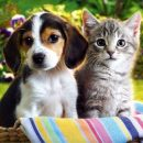 Best protection against ticks for dogs and cats