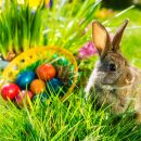 Cholesterol for Easter – how many eggs it may be?